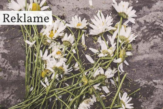 Blomster på jorden